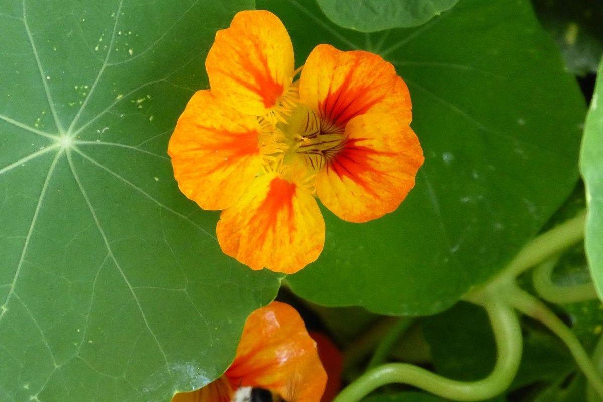 Blumen (31b) Selbstheilung
