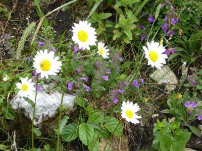 Blumen (38) Beziehungen