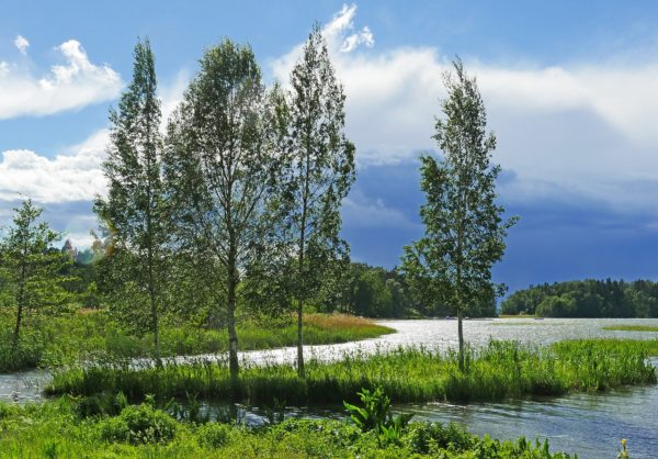 Schweden Lappland (1)