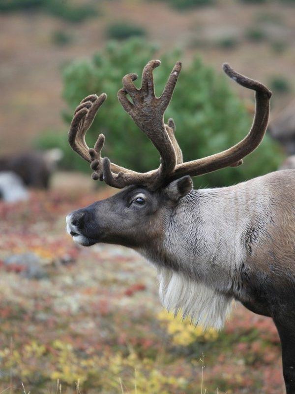Schweden Lappland (6b)