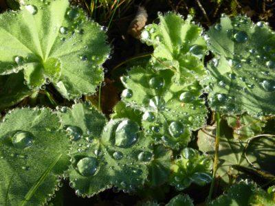 Pflanzen (11) Intuition und Bewusstsein