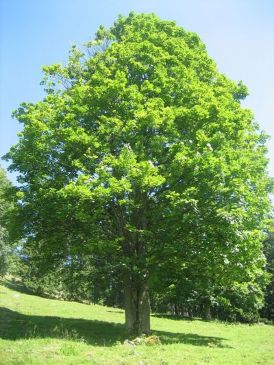 Baum (10) Meditation