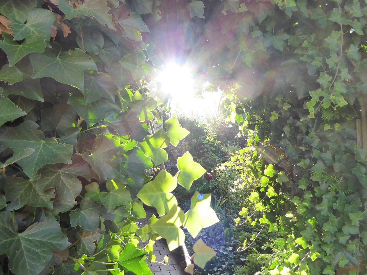 Baum (6)