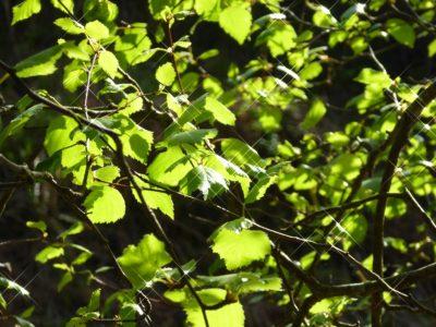 Baum (7)