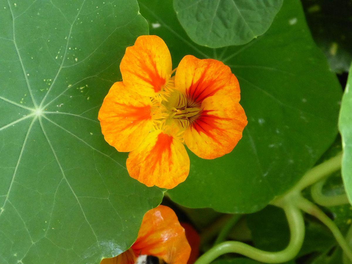 Blumen (31) Selbstheilung