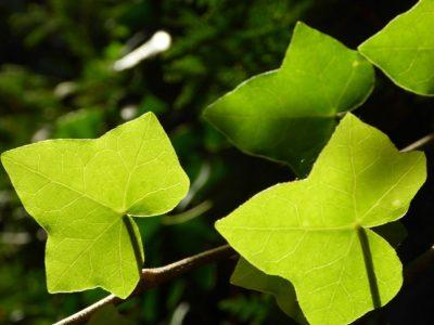 Pflanzen (2)