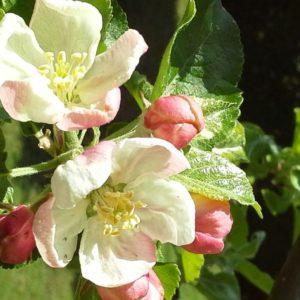Blumen (6b)