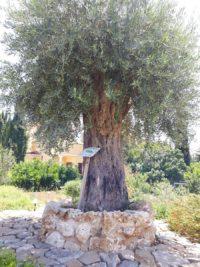 Zypern (7)