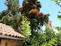 Zypern (9)