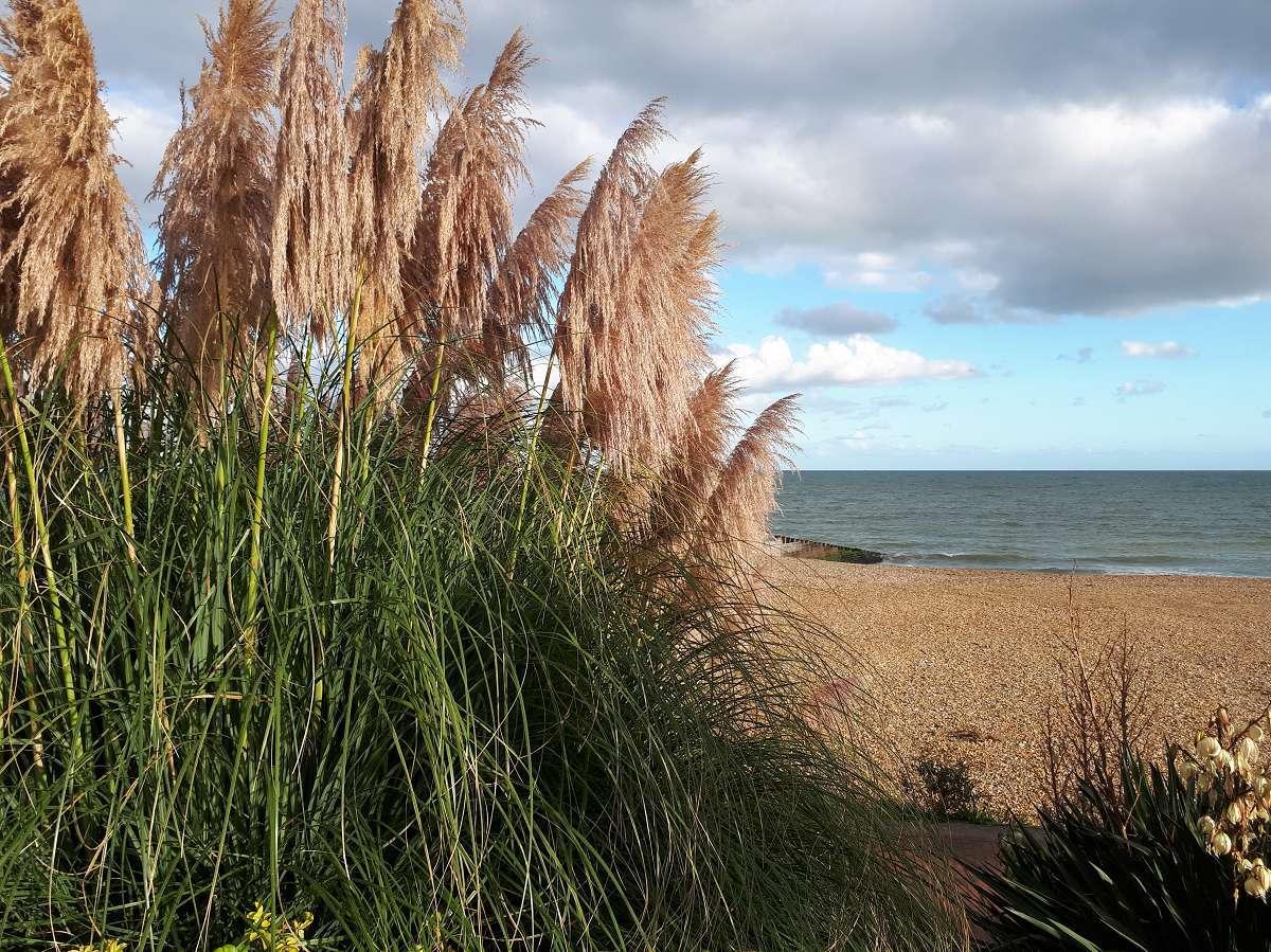Eastbourne (6)