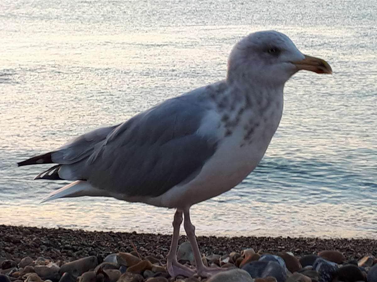 Eastbourne (8)