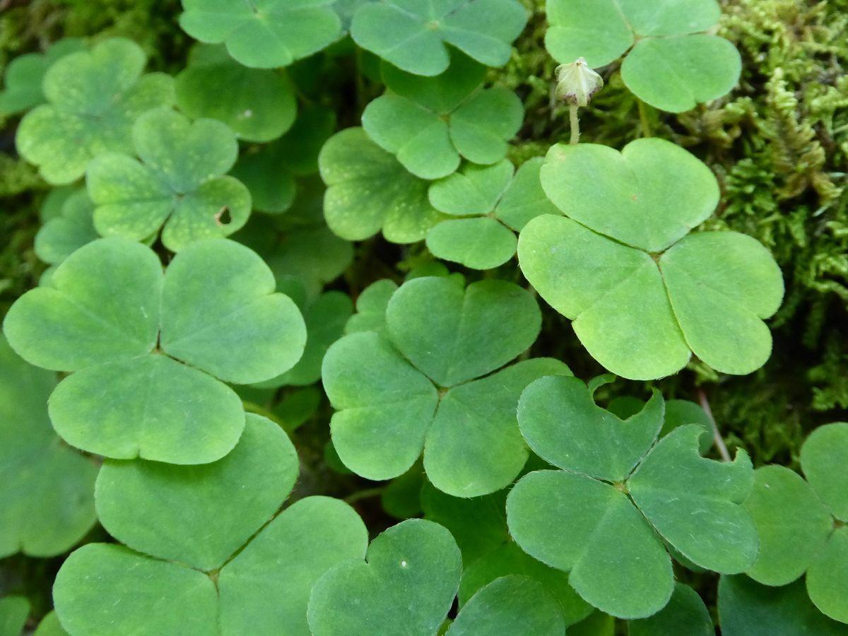 Pflanzen (9)