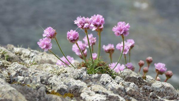Blumen (5b)
