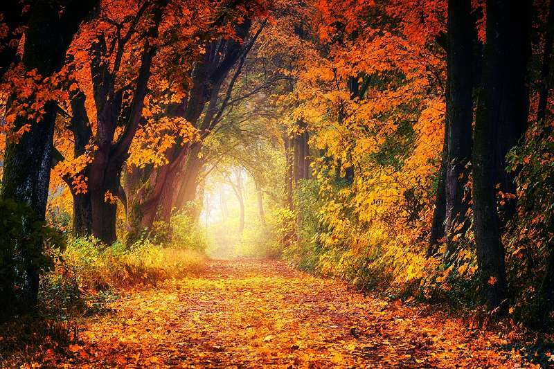Herbstlandschaft Heilung