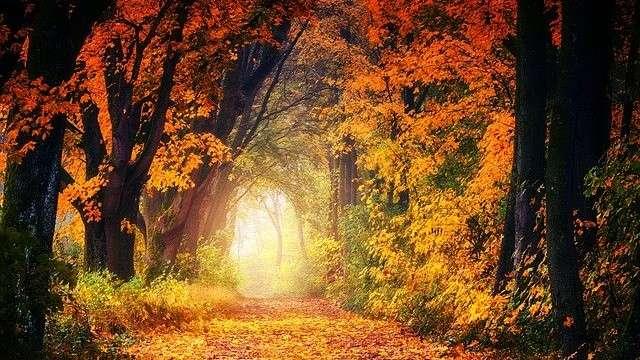 Herbstwald Heilung